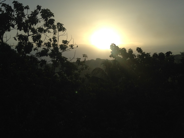 Sunrise over the avocado trees on my first morning. #100DaysInParadise